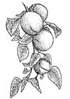 Målarbild aprikoser
