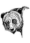 Målarbild björn