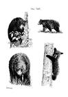 Målarbild björnar