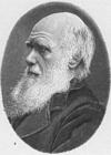 Målarbild Charles darwin