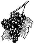 Målarbild druvor