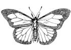 Målarbild fjäril