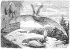 Målarbild fladdermus