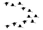 Målarbild flock med änder