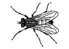 Målarbild fluga