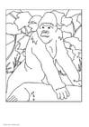 Målarbild Gorilla