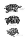 Målarbild havsköldpadda