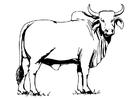 Målarbild helig ko