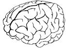Målarbild hjärna