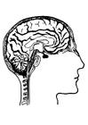 Målarbild hjärnor