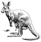 Målarbild känguru
