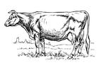 Målarbild ko