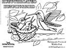 Målarbild Kolibri