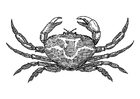 Målarbild krabba