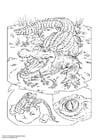 Målarbild krokodil