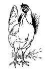 Målarbild kyckling