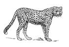 Målarbild leopard