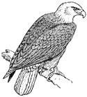 Målarbild örn