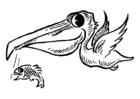 Målarbild pelikan med fisk