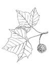 Målarbild plan träd