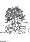 Målarbild potatisplanta