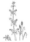 Målarbild rödbeta majs korn