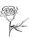 Målarbild ros