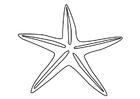 Målarbild sjöstjärna
