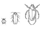 Målarbild skalbaggar