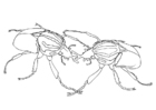 Målarbild skalbaggar som slÃ¥ss