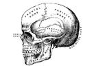 Målarbild skalle