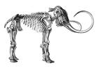 Målarbild skelett mammut