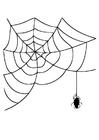 Målarbild spindelväv med spindel