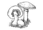 Målarbild svampar