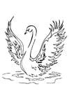 Målarbild svan