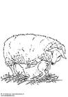 Målarbild tacka med lamm
