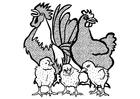 Målarbild tupp, höna och kycklingar
