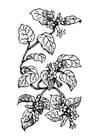 Målarbild växt