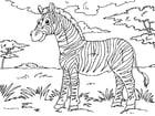 Målarbild zebra